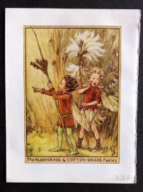 Cicely Mary Barker C1940s Flower Fairy Print. Rush-Grass & Cotton-Grass Fairies